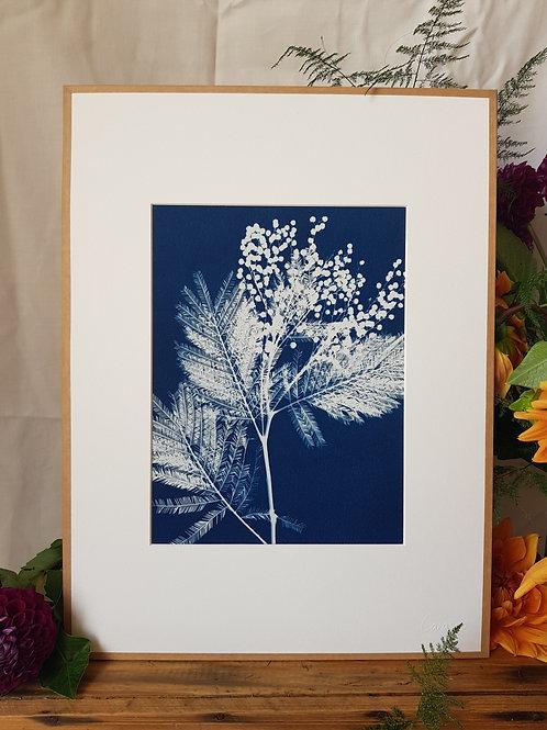 Mimosa 2  - 30x40cm