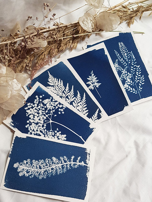 5 Cyanotypes 10x15cm - Bouquet 3