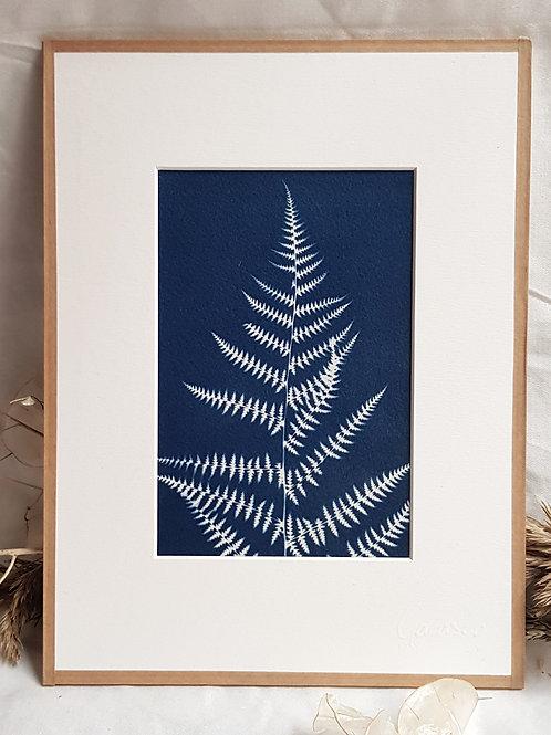 Fougère fine - cyanotype encadré - 18x24cm