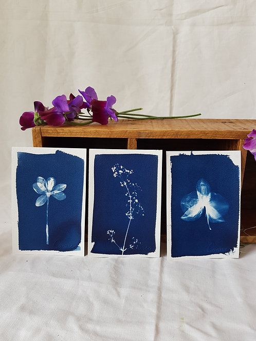 3 Cyanotypes 10x15cm - Bouquet 1