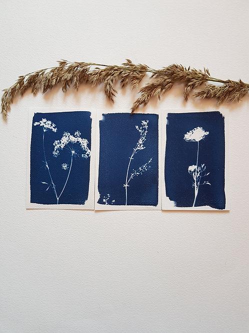 Lot de 3 cyanotypes format 10x15cm - Bouquet 4