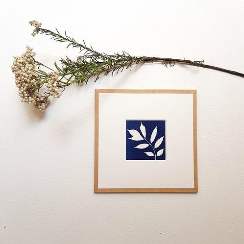 Cyanotype encadré 15x15cm - Feuille de Frêne
