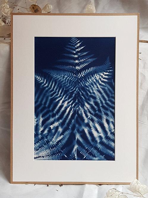 Fougère double exposition - cyanotype encadré - 30x40cm