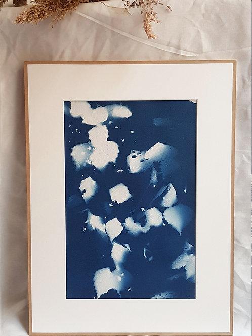 Feuilles de Bouleau - cyanotype encadré - 30x40cm