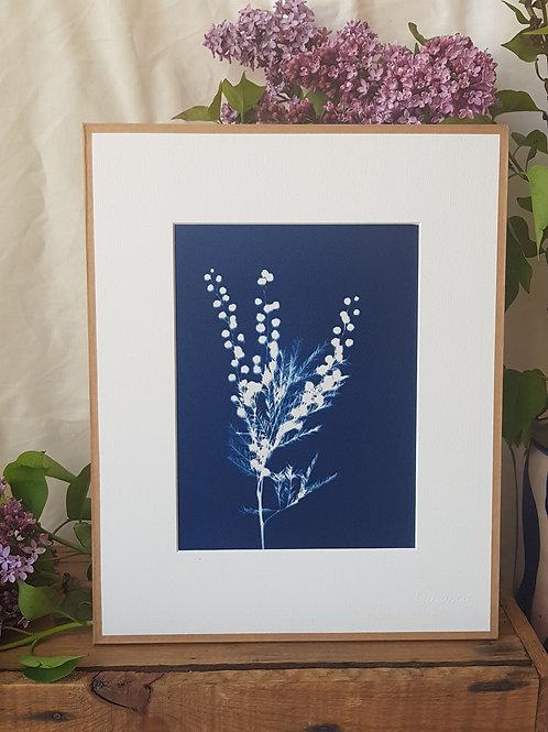 Mimosa - 24x30cm