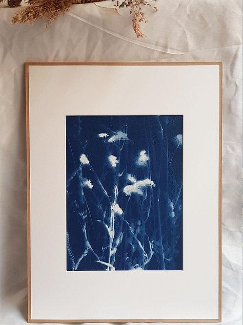Fleurs des champs - cyanotype encadré - 30x40cm
