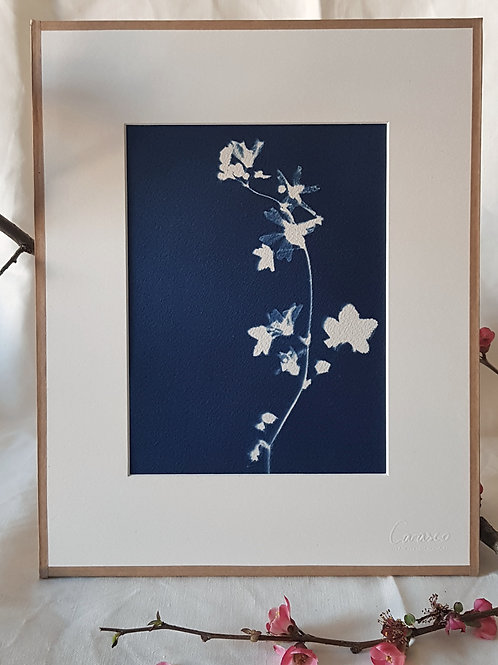 La danseuse - cyanotype encadré - 24x30cm