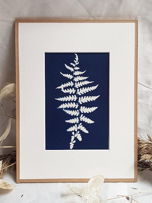 Fougère dansante - cyanotype encadré - 18x24cm