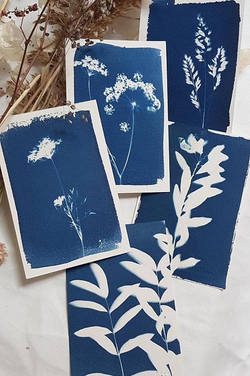 5 Cyanotypes 10x15cm - Bouquet2