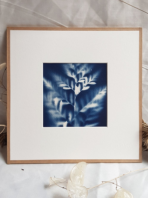 Fougère évanescente - cyanotype encadré - 20x20cm