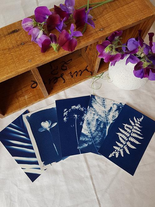 5 Cyanotypes 10x15cm - Bouquet 3
