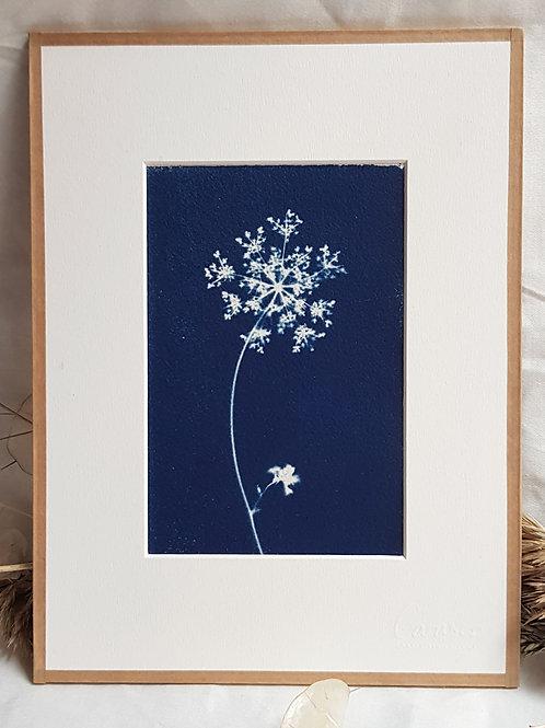 Ombelle étoile - cyanotype encadré - 18x24cm