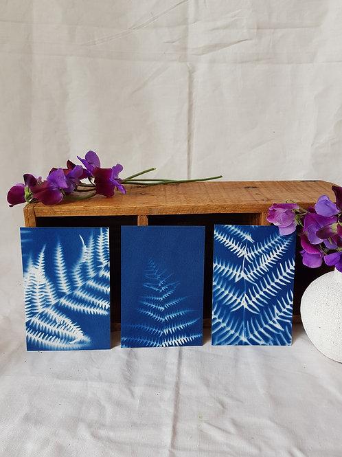 3 Cyanotypes 10x15cm - Bouquet 2