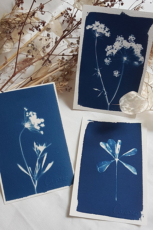 3 Cyanotypes 10x15cm - Bouquet 3