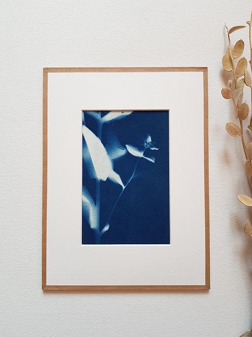 Cyanotype encadré 18x24cm - La mystérieuse - série abstraite