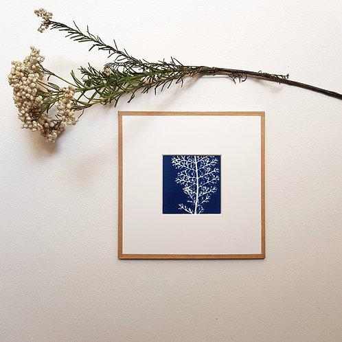 Cyanotype encadré 15x15cm - Achillée