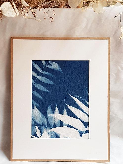 Sumac Feuilles - cyanotype encadré - 24x30cm