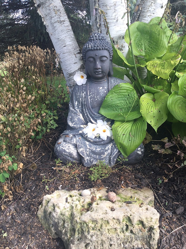 Ann's garden 2