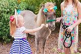 Bustos Unicorn Portraits-Bustos Unicorn