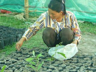 Cambodian Farmland Carbon Success