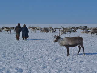 Russian Arctic Opens Doors to Native Knowledge