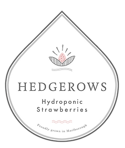 Hedgerows Hydroponic strawberries, Fresh strawberries