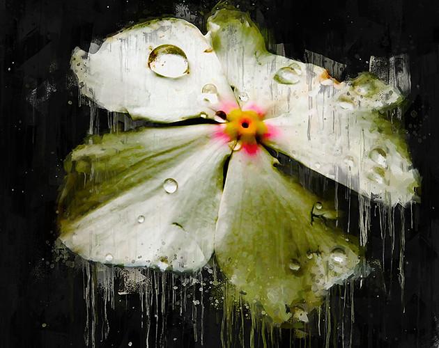 La Petite Fleur.jpg