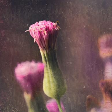 Pollen - Art by Cristiano Chaussard-art
