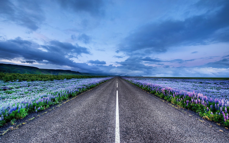 Iceland-landscape-road-meadows-flowers-h