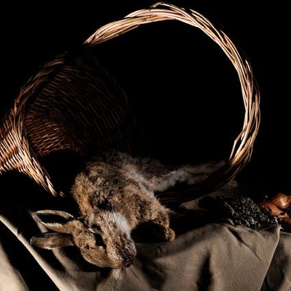 Lapin de Garenne (Oryctolagus cuniculus 1)
