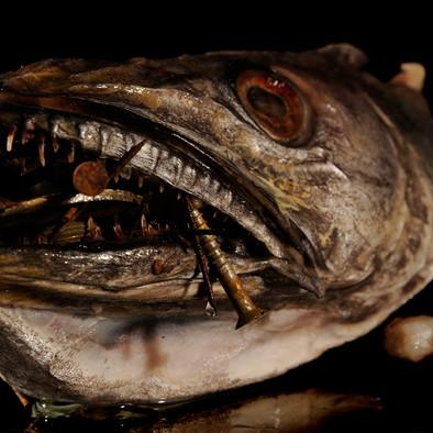 Nature morte au poisson