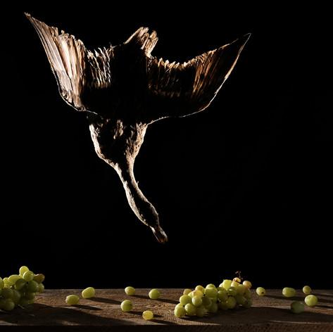 Canard (Anas fulvigulas)