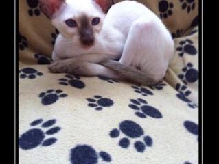 Beautiful Miss Meka as kitten