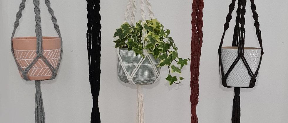 multiple colour spiral plant hangers