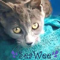 SeaWee_edited.jpg