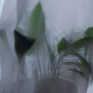 Kavuşma/The Hug
