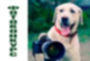 Собака-сайт.jpg