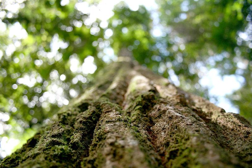 amazonia-Flavioloka_00278530_0_202011121715.jpg