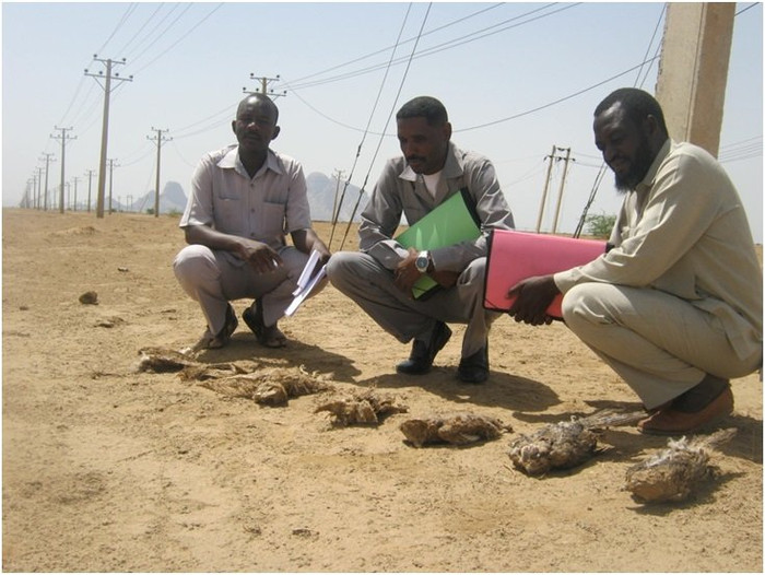 How many more killer powerlines are there in Sudan?