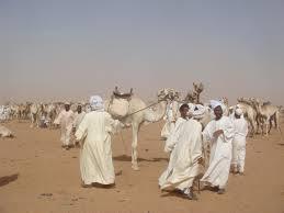 WE LOVE CAMELS !
