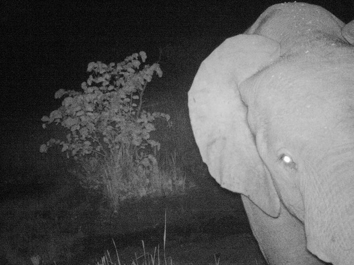 Rare Forest Elephants Seen for the First Time in South Sudan
