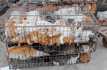 10.000 to stop the slaughter against cats