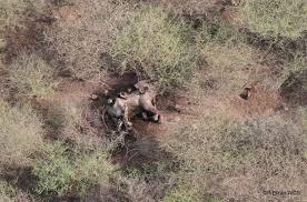 ELEPHANTS STILL in DANGER