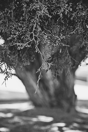 PROUD TREE HUGGER