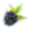 Blackberry-Fruit-PNG-Pic.png