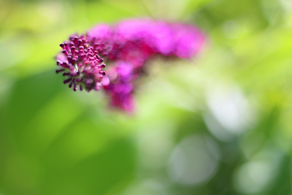 Flower by Carol R Montoya Fine Art Photography