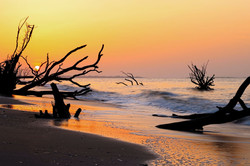 South Carolina Boneyard Beach by Carol R Montoya Fine Art Photography