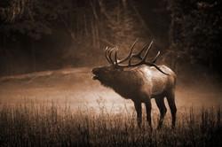 Cataloochee Bull Elk In Sepia by Carol R Montoya Fine Art Photography