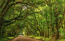 Botany Bay Edisto Island South Carolina..by Carol R Montoya Fine Art Photography