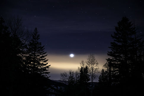Moonlight, stars, and trees